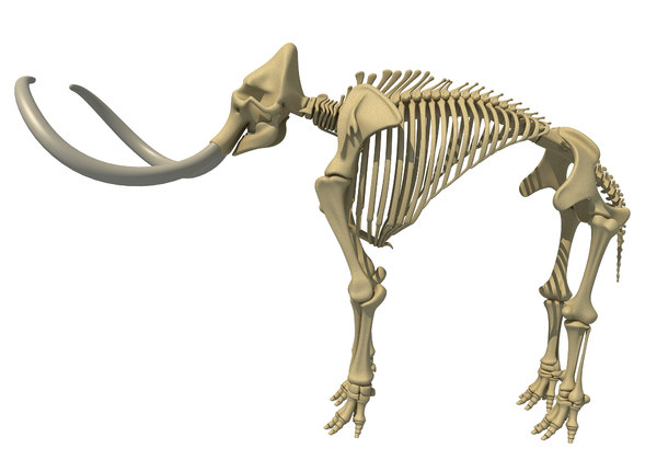 mammoth skeleton model