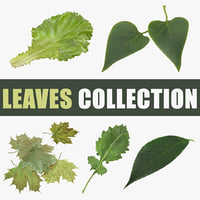 3D leaves leaf cherry model