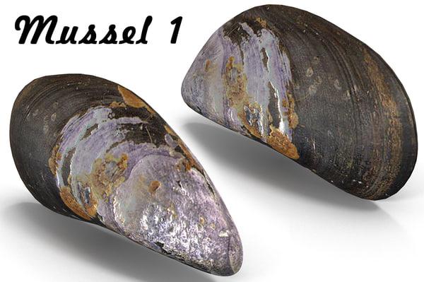 mussel pbr model