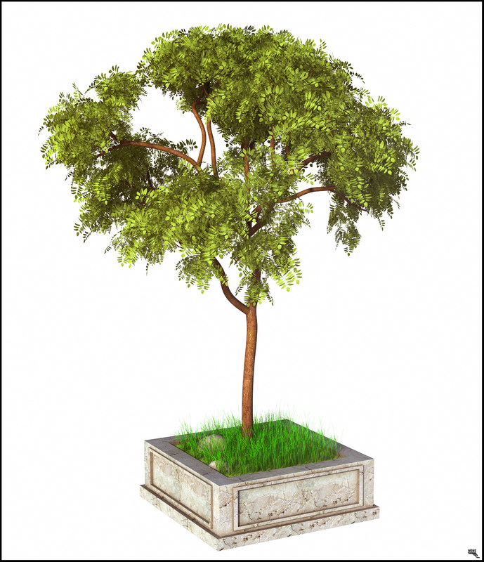 tree exotic 3D model