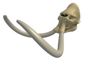 mammoth skull skeleton 3D model