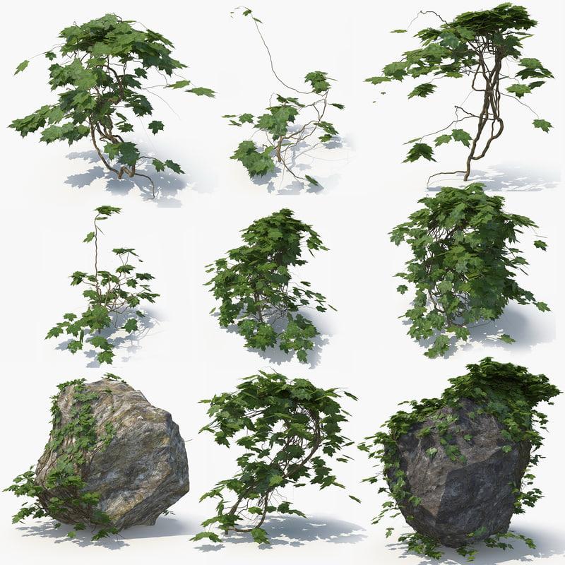 3D ivy plant rock 02 model