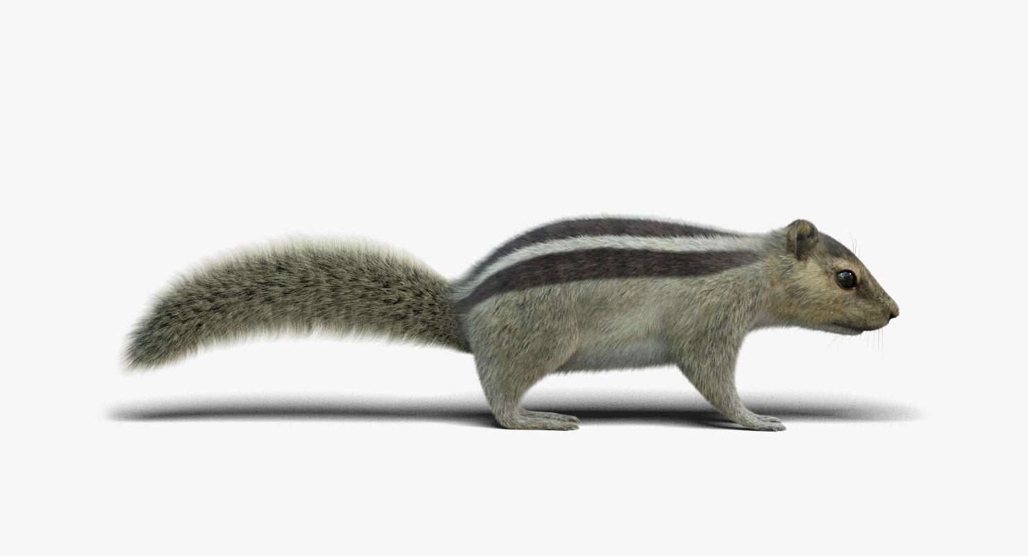 3d Drawing Software Free 3d Squirrel 2 Fur Model Turbosquid 1233971