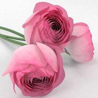 ranunculus flowers 3D model
