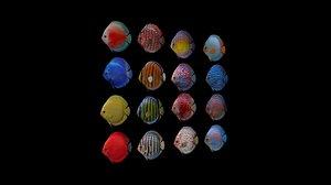 16 discus fish 3D model