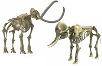 skeleton mammoth elephant 3D model