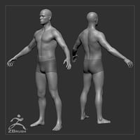 average male body basemesh model