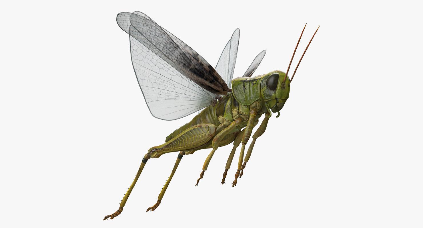 3D grasshopper jumping pose