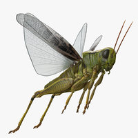 Grasshopper Jumping Pose 3D Model