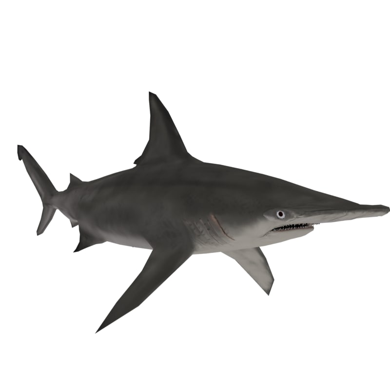 3D hammerhead shark model