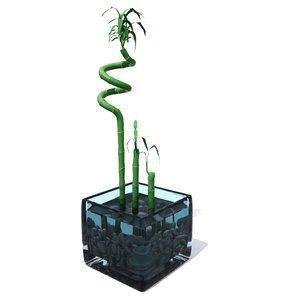 bamboo lucky 3D model