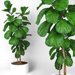 ficus fiddle fig leaf model
