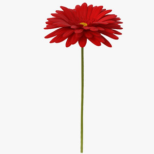 3D model red gerbera flower
