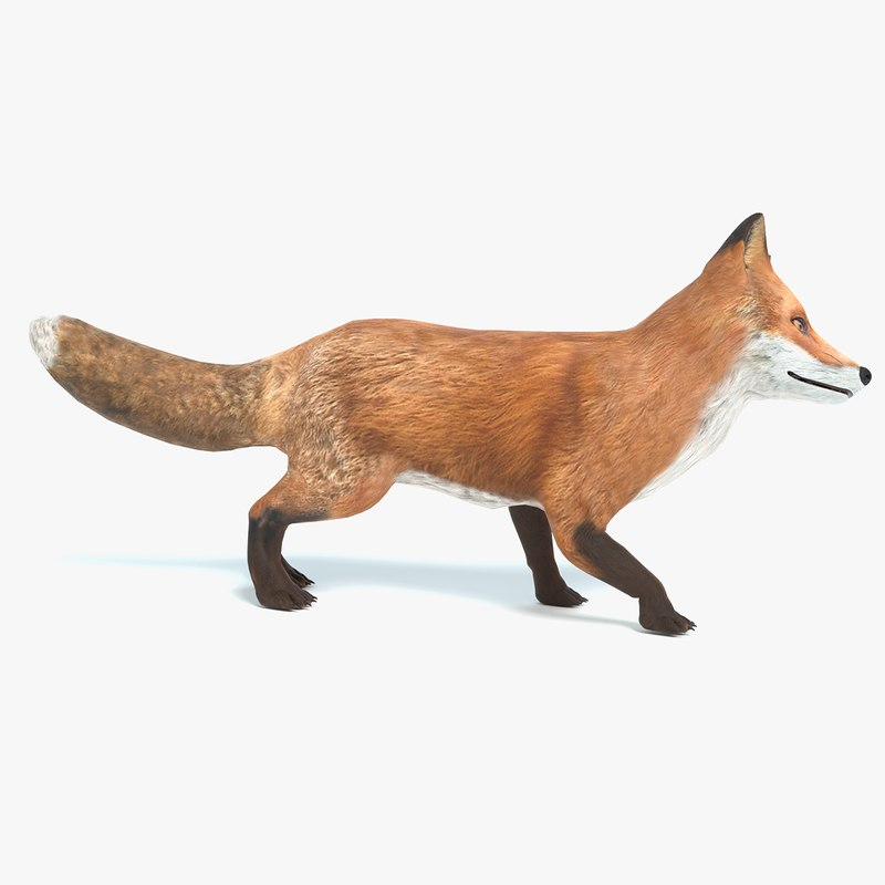 3D model fox animations