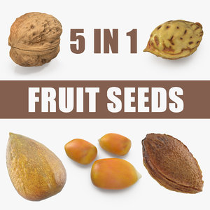 fruit seeds 3D model