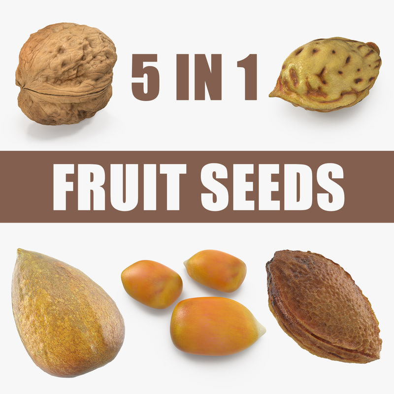 fruit seeds 3D model