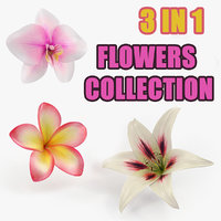 Flowers Collection 5