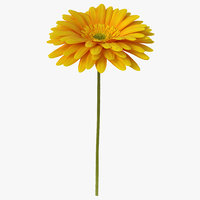 3D yellow gerbera flower model