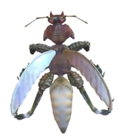 mutated beetle ant mantis model