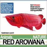 3D model red arowana