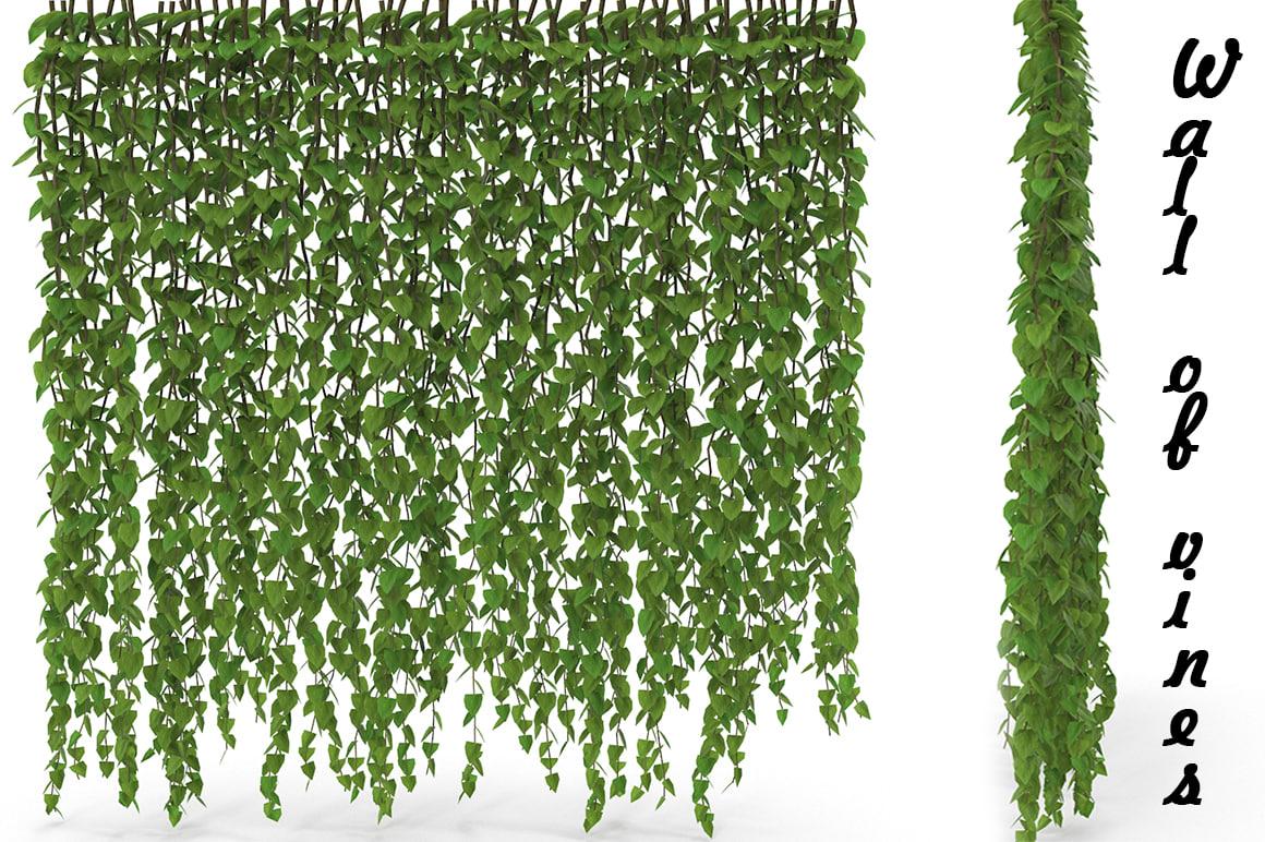 wall vines 3D model
