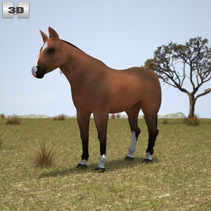 3D thoroughbred