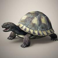 tortoise 3D