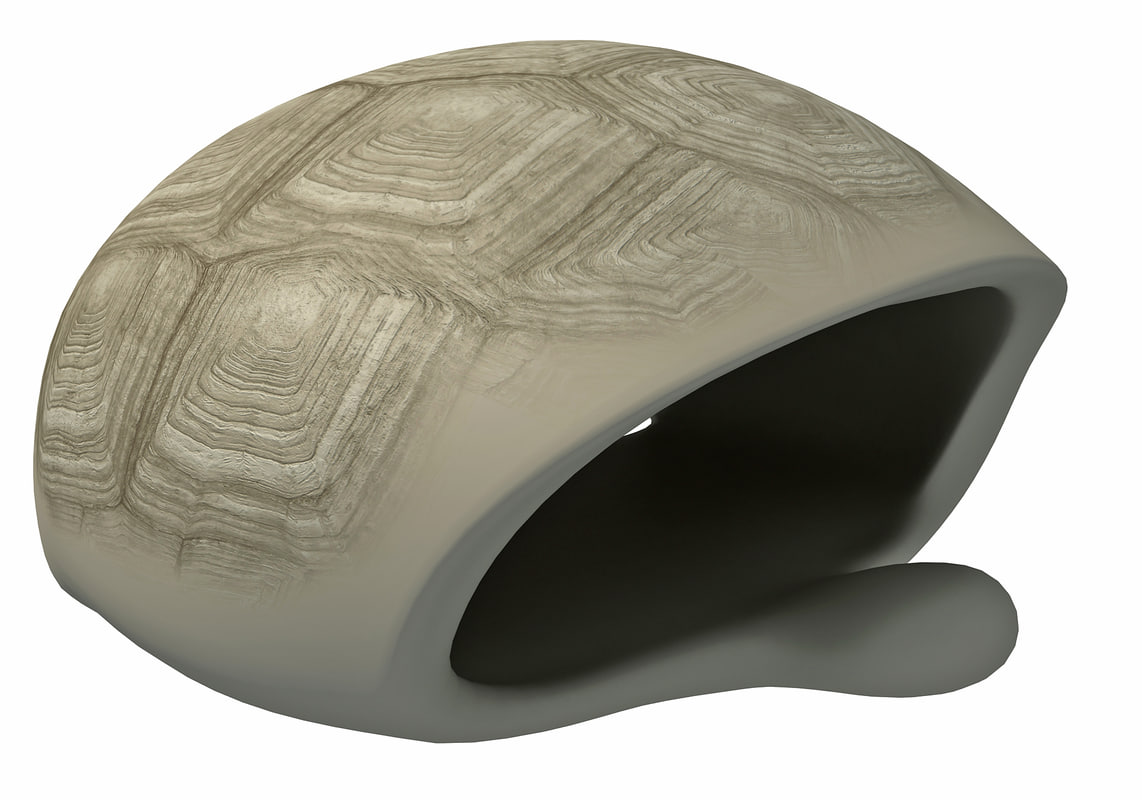 turtle shell skeleton 3D model