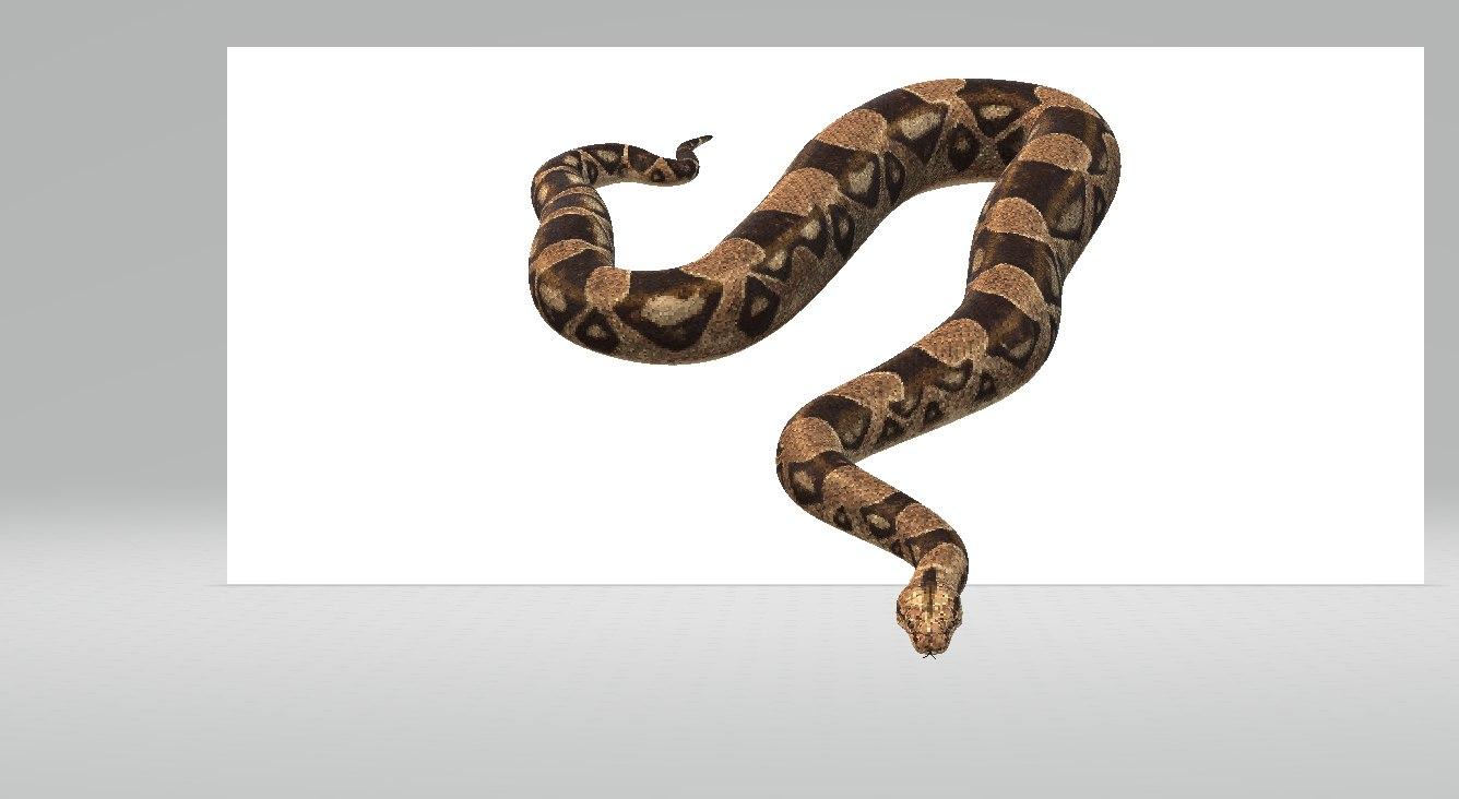 snakes model