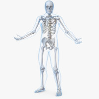 male body skeleton rigged 3D model