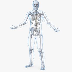 male body skeleton rigged 3D model
