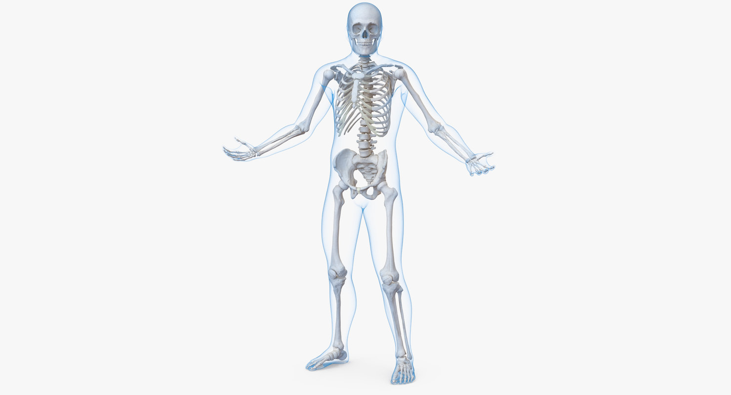 Male Body Skeleton Rigged 3d Model Turbosquid 1236272