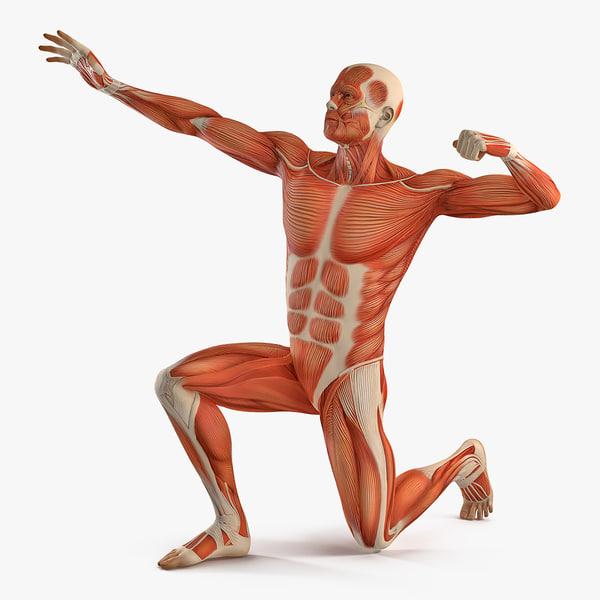 male muscular bodybuilder pose 3D