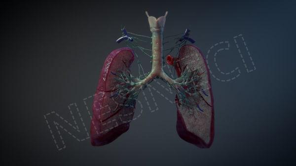 3D lymph vessels nodes lung