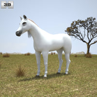 3D model arabian arab horse