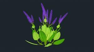 3D salvia plants model