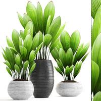 palm grass 3D model