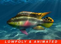 Very low poly animated Kribensis fish