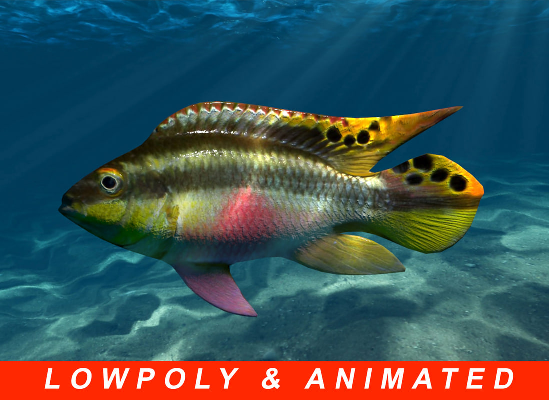 low-poly animation 3D model