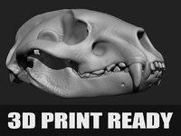 Articulated Badger skull 3D print ready !