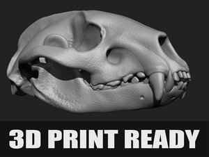 anatomy badger printing ! 3D