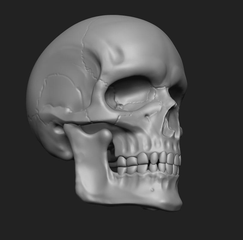 Anatomy human skull printing 3D model - TurboSquid 1236916