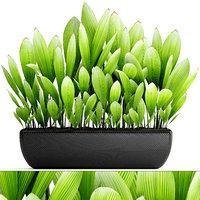 palm grass 3D
