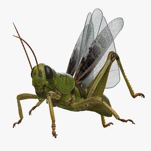 grasshopper rigged 3D model