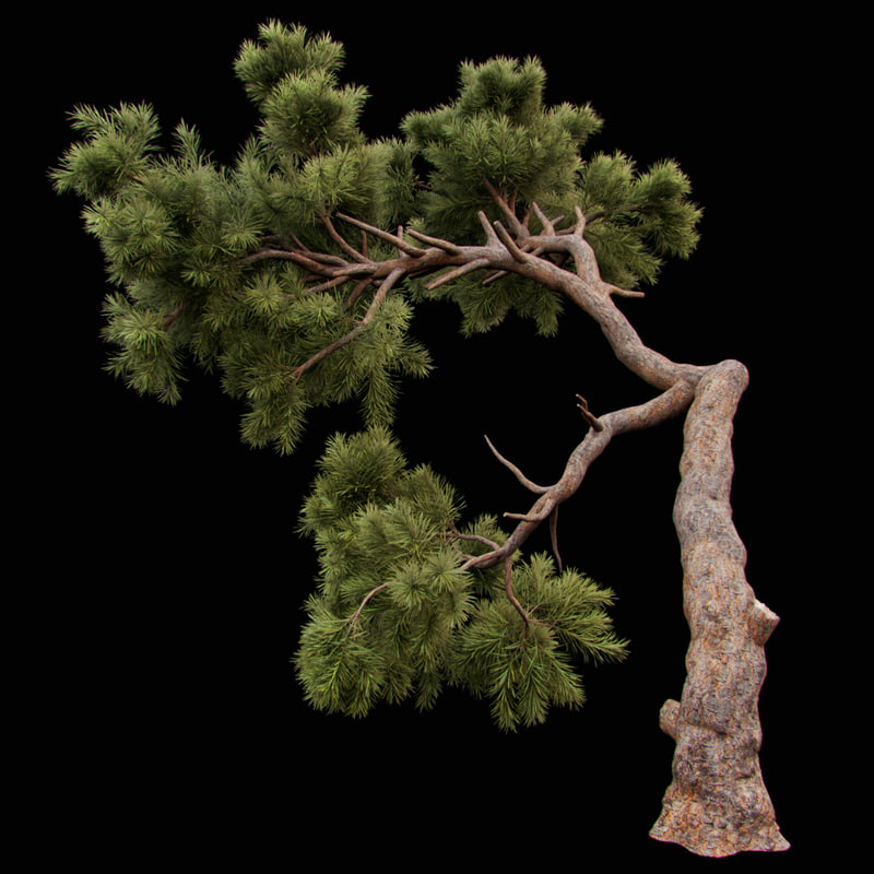 3D curved pine tree model