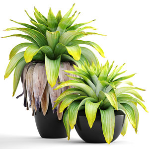 3D tropical plant shrubs model