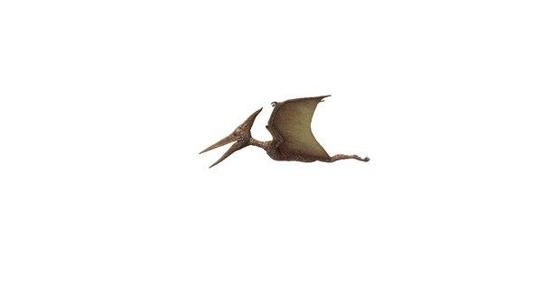pterodactylus reptile 3D model