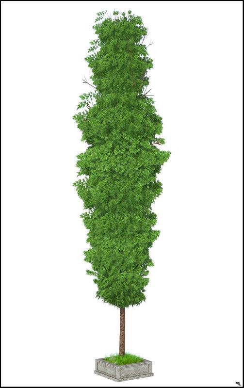 cipres tree 3D model