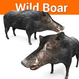 3D wild boar model