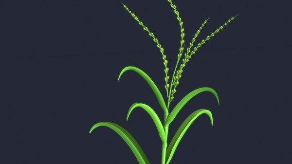 3D maize plant model
